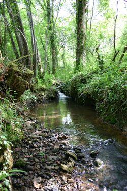 Ruisseau des Vergnes