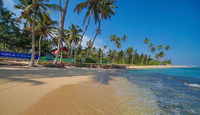 Turtle Eco Beach 3
