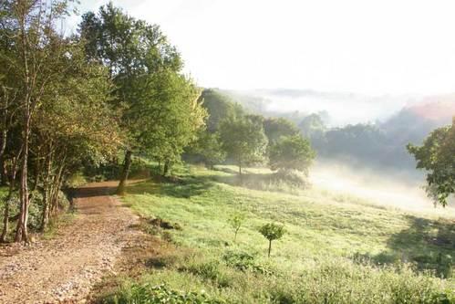 Montagenet - le parc sous la brume